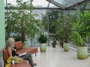 Зимние сады и использование растений в дизайне интерьеров
