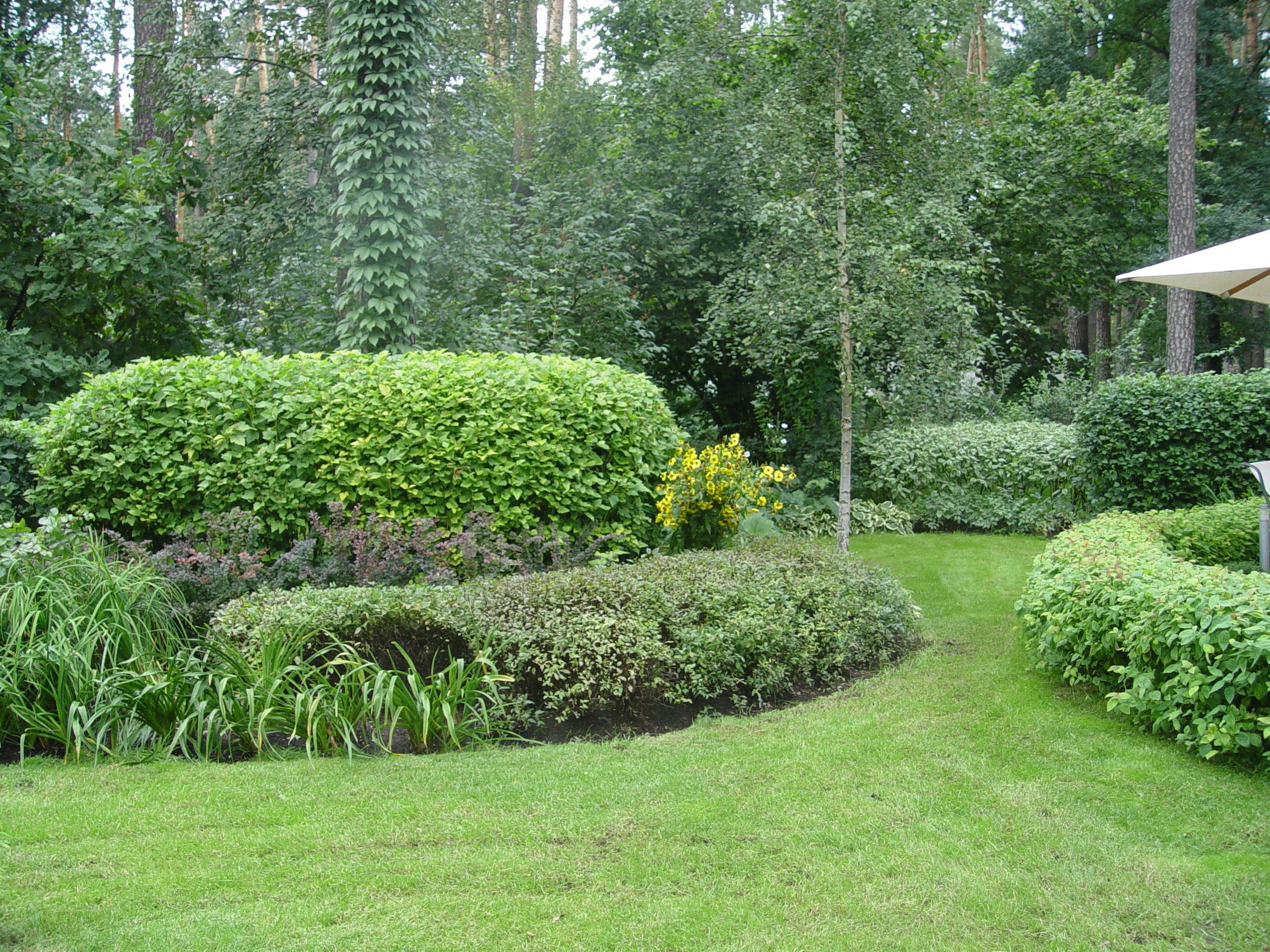 классно, что сад елены константиновой фото это сарказм, это